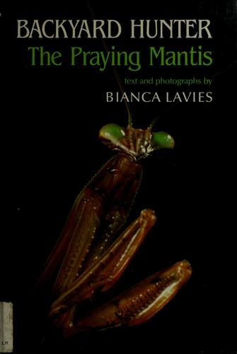 Backyard hunter by Bianca Lavies